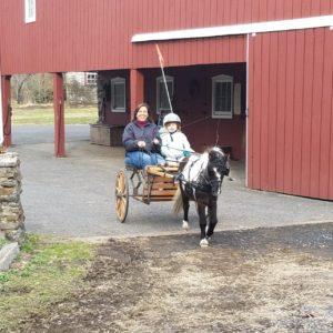 mini-horse cart