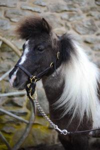 Horse 3 Lucky Mae