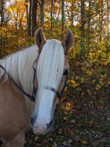Living Streams Ranch Horse Juliet